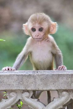 A cute small monkey Beautiful Creatures, Animals Beautiful, Cute Baby Monkey, Small Monkey, Animals And Pets, Funny Animals, Mundo Animal, Tier Fotos, Cute Little Animals