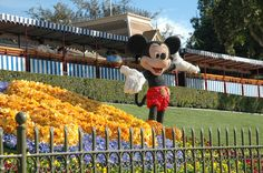 """Daily Disneyland: Mickey in Flowers Apple iBooks """"Disneyland A Photographer's Dream"""" https://itun.es/us/itjT3.l  (over 600 photos only $5.99) Download a free chapter today!! www.mickeyphotos.com Flickr: https://flickr.com/msdlpierce7530 Twitter: https://twitter.com/msdlpierce7530 Facebook: http://Facebook.com/mickeyphotosdisneyland 500px: http://500px.com/msdlpierce7530"""
