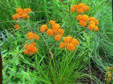 Drought resistant plants: U of M Extension