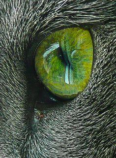 The Amazing World of Cat's Eye Macro Photography Natur Wallpaper, Regard Animal, Gatos Cat, Eye Close Up, F2 Savannah Cat, Fotografia Macro, Tier Fotos, Fauna, All About Eyes