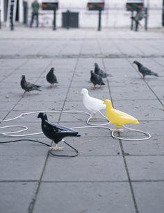 Pigeon Light, Ed Carpenter