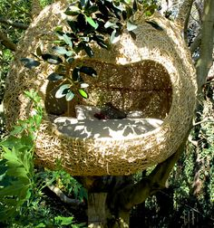 Human nests and why not Gardens Pinterest Why not and Nests