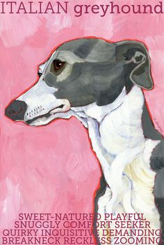 Italian Greyhound No 3  Grey and white 2x3 magnet by ursuladodge, $5.99