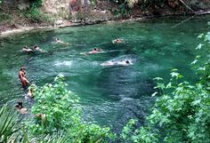 Blue Springs. Deland, Fl. Loove going here during hot Florida summers!