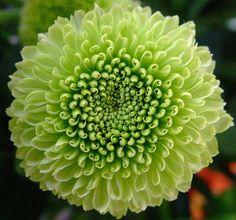 I love green petals.