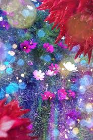 「蜷川実花 壁紙」の画像検索結果