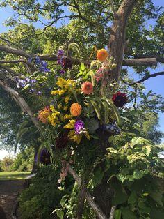 Tiger Garden - Wildflower Arbor - Fall Wedding