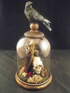 Antique victorian inspired taxidermy bat, glass dome dipslay/crow,skull,beetles
