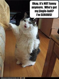 """""""Okay it's not funny anymore. Who's got my jingle ball? I'm serious!"""" #lolcat"""