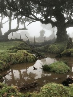 Dark Paradise, Nature Aesthetic, Forest Fairy, Pretty Pictures, Aesthetic Pictures, Mother Nature, Twilight, Beautiful Places, Scenery