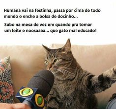 #forçagatinho Funny Dog Memes, Cat Memes, Funny Cats, Gatos Cats, Little Pets, Have Some Fun, I Love Cats, I Laughed, About Me Blog