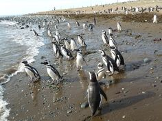 The Isla Magdalena national park  is a 1,576 km2  protected area in Magdalena Island, Patagonia, Chile.