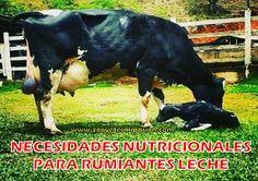 21. Necesidades nutricionales para rumiantes leche: NORMAS FEDNA (2009)