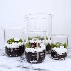 Laboratory Beaker Terrarium With Succulent Planting Set
