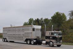 "Peterbilt 362 Coe - Livestock Haulers ""Last Call"""
