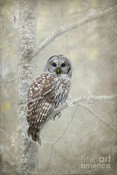 Bird Of Prey Print featuring the photograph Guardian Of The Woods by Beve Brown-Clark Photography