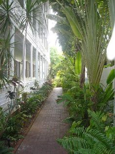 Brick walk along a British Colonial Home (exterior) with many palms and ferns
