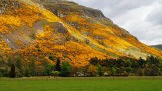 Sunlight lights up the gorse on the Ochil Hills, Scotland.