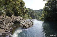 Waitakere Walks: Short and Easy Trails: Nature's own infinity pool, Piha, Waitakere Ranges