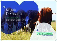 En #Bersamex conocemos los #Riesgos a los que estas expuesto, por lo que a travez de un #SeguroPecuario protegeremos tu #Inversión con coberturas que se adaptan a tus necesidades de #Protección. #AsegúrateBien #SeguroAgropecuario