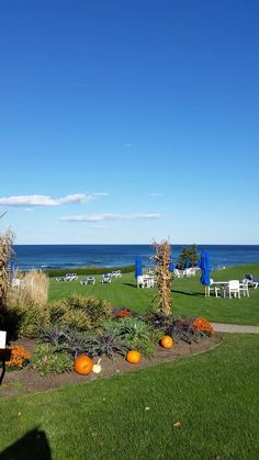 It might be the most perfect fall day today.  Enjoying Ogunquit, Maine and the warm sun and fall breeze along the Marginal Way.   Embedded image permalink