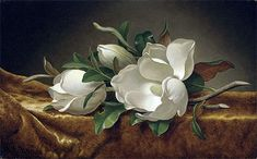 Floral Painting - Magnolias On Gold Velvet Cloth by Martin Johnson Heade Artist Canvas, Canvas Art, Canvas Prints, Art Prints, Martin Johnson Heade, Magnolia Flower, Arte Floral, Blossom Flower, Tropical Flowers
