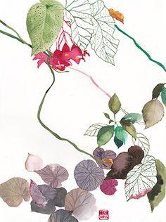 Begonia-CC1.jpg (298×400)