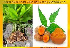 हल्दी कुदरत का वरदान - हल्दी के फायदे व नुकसान - haldi ke fayde - haldi ke nuksan All News, Health Tips, Plants, Fun, Plant, Planting, Lol, Planets, Healthy Lifestyle Tips