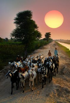 Sunset Pakistan