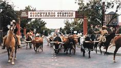 Fort Worth Herd; daily longhorn cattle drive, Stockyards district, Fort Worth