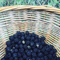 Si no encuentras setas... llena la cesta de moras! #dontworrybehappy #forest #naturaleza