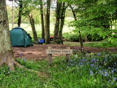 love love love this  campsite !!!  Campsite, Wapsbourne Manor Organic Farm, East Sussex. Bluebells, wild honeysuckle, blackberries and other wild foods are plenty, so come and pick a feast http://www.organicholidays.co.uk/at/2167.htm