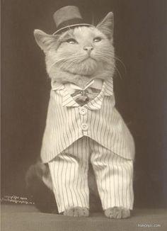 Classy cat in a suit.