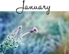 See David Domoney's gardening calendar with just the three most important garden jobs to do every month of the year. Organic Gardening Magazine, List Of Jobs, Plantar, Months In A Year, Gardening Calendar, Wild Flowers, January, Key, Garden Ideas