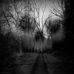 Find images and videos about dark, forest and blackandwhite on We Heart It - the app to get lost in what you love. Photo D Art, Foto Art, Memento Mori, Dark Fantasy, Fantasy Art, Art Noir, Totenkopf Tattoo, Dark Places, Dark Forest
