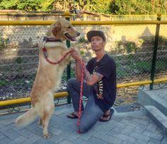 With Mozza the GoldenDog