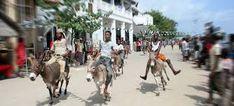 Image result for donkey race Event Calendar, Donkey, Just Go, Street View, Racing, Festivals, Events, Image, Kenya