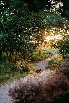 Sunset Forest Path, Suffolk, England photo via violet Image Youtube, Flirty Quotes For Her, Assassin's Creed 3, Suffolk England, Paraiso Natural, Forest Path, All Nature, Flirting Quotes, Flirting Messages
