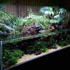 10 Tips on Designing a Freshwater Nature Aquarium Aquarium Terrarium, Planted Aquarium, Fish Tank Terrarium, Aquarium Garden, Aquarium Landscape, Nature Aquarium, Home Aquarium, Aquarium Design, Garden Terrarium