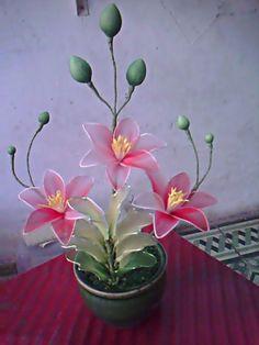 Resultado de imagem para hoa voan