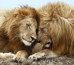 Love is universal.
