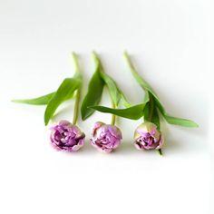 チューリップと言えば赤や黄色のイメージがあったけれどこんなに可憐な薄紫色もあるんですね緑と紫のコントラストにハッとしました #北欧暮らしの道具店#花#お花#ザ花部#花のある暮らし#花のある生活#朝#あさ#朝時間#チューリップ by hokuoh_kurashi