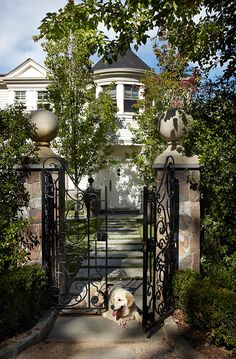 Love the gates (and the dog!)