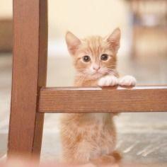 :)cats
