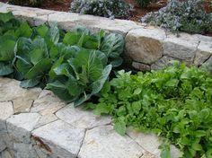Traditional Landscape Tiered Vegetable Garden Design Ideas, Pictures, Remodel, and Decor Raised Vegetable Gardens, Veg Garden, Vegetable Garden Design, Terrace Garden, Edible Garden, Garden Beds, Edible Plants, Hillside Garden, Garden Walls