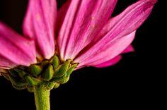 Field Flower by Fabio Cerati on 500px