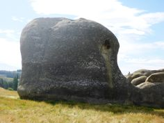 Elephant rock, Fossils and fun Geology, The Vanished world trail of the Waitaki district New Zealand. – Viatori -  #travel #newzealand #elephant #narnia