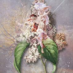 EUPHORIE  Kits: Frost and mix of kits by Foxeysquirrel Frost, Floral Wreath, Wreaths, Kit, Plants, Home Decor, Homemade Home Decor, Door Wreaths, Flora