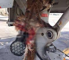 Turkish Airlines flight #TK1668 from Hamburg collided with a bird on approach into Istanbul.