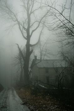 solitude by vilma.  Fog and house in the woods